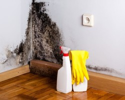 Плесень − как устранить запах сырости в квартире