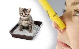 Чем можно вывести запах кошачьей мочи