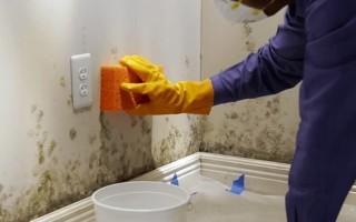 Методы борьбы с плесенью в ванной и кухне