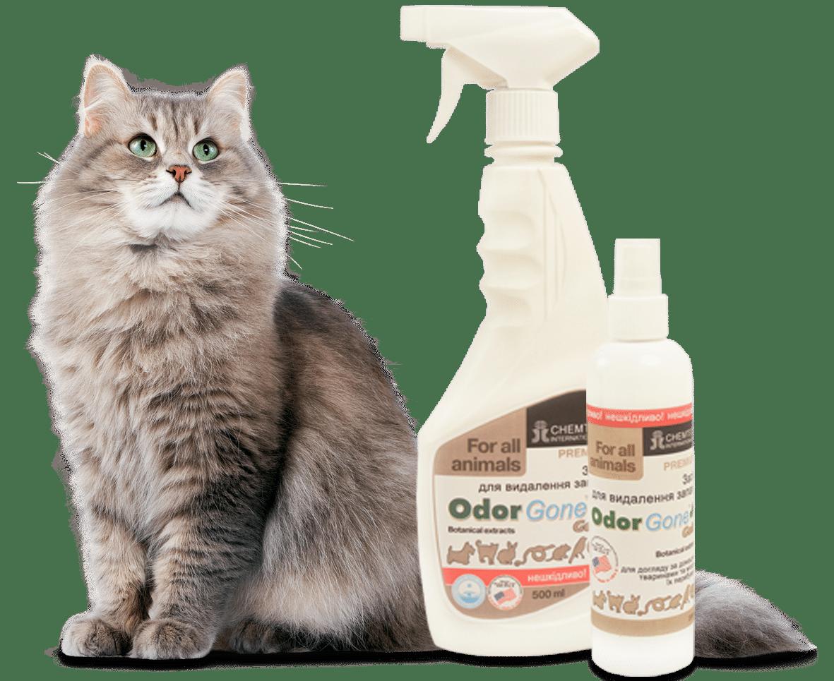 Как избавиться от запаха кошачьей мочи профессиональным средством