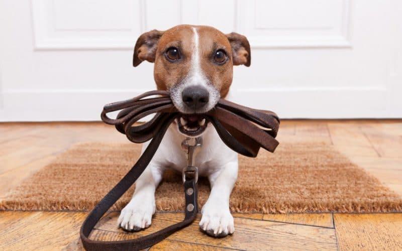 Запах собаки в доме